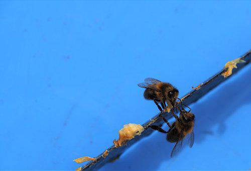 Bees, Wax, Hive, Beekeeping, Insects, Nature, Blue