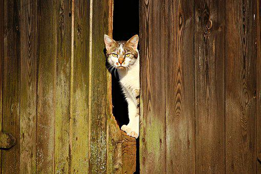 Cat, Mieze, Kitten, Domestic Cat, Pet, Animal