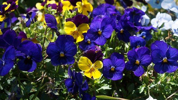 Flowers, Garden, Spring, Blossom, Plant, Bloom, Nature