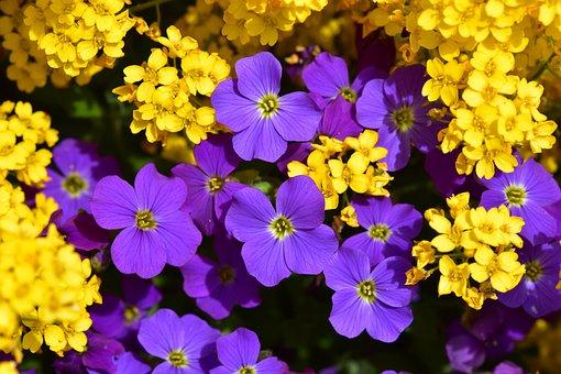 Flowers, Yellow Flowers, Purple Flowers, Garden, Flower