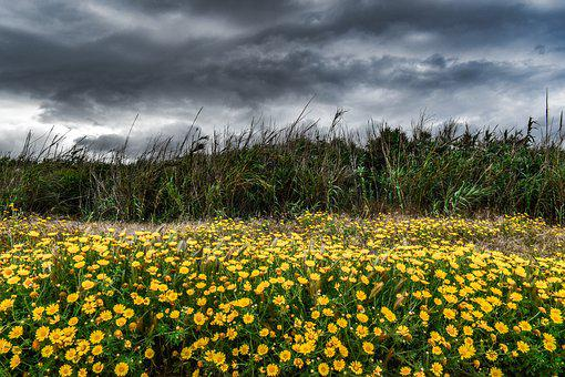 Landscape, Spring, Nature, Field, Sky, Clouds, Storm