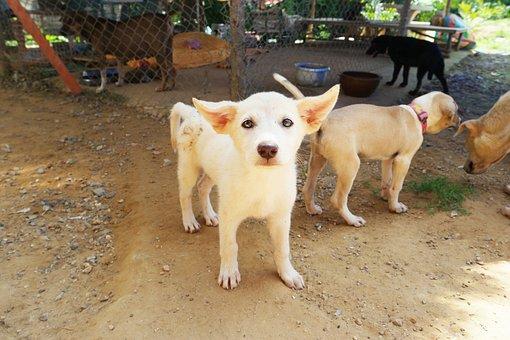Dog, Stray, Puppy, Street Dog, Rescue Dog, Yoda