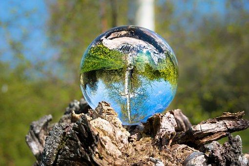 Glass Ball, Birch, Ball, Tree, Tree Stump, Upside Down