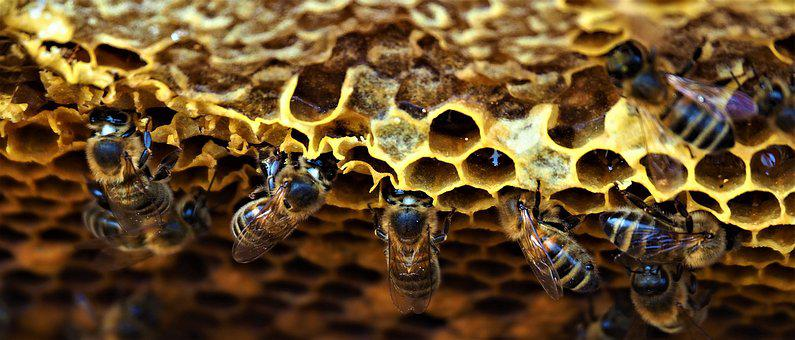 Hive, Bees, Insects, Honey, Beekeeping, Nature, Workers