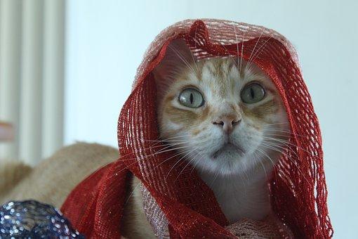 Kitten, Feline, Cute, Adorable, Kitty, Pet, Young