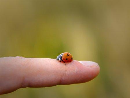 Ladybug, Animal, Nature, Finger, Landing, Small, Beetle
