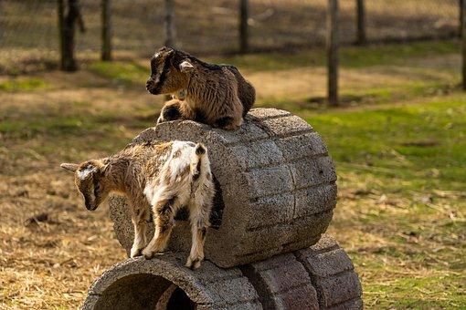 Animal, Baby Animal, Nature, Mammal, Animal World, Play