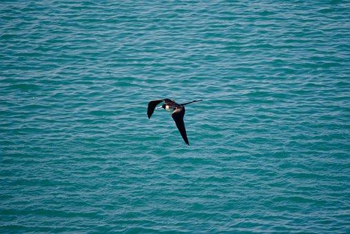 Bird, Ocean, Sea, Beach, Seagull, Nature, Water, Animal