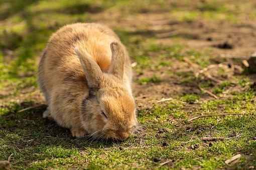 Animal, Hare, Rabbit, Easter, Cute, Animal World