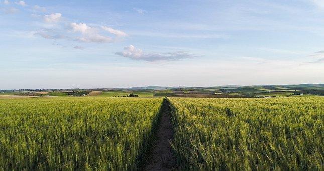 Fern, Agriculture, Field, Plantation