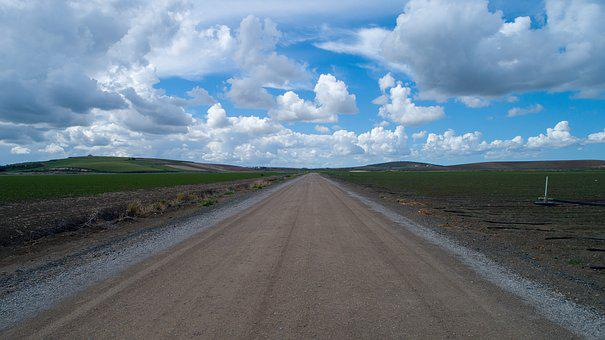 Fern, Agriculture, Field, Plantation, Path, Earth