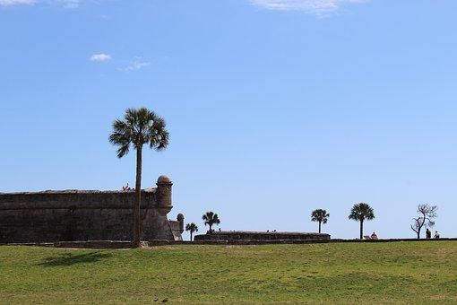Palm, Sky, Summer, Florida, Tropical, Fort, St
