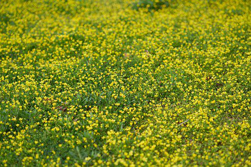 Grass, Daisies, Spring, Yellow, Green, Beautiful, Great