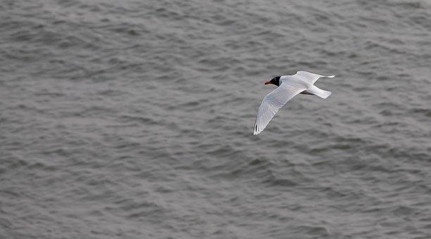 Sea Bird, Grey Sea, Uk Sea, Bird, Nature, Seagull