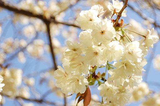 Natural, Landscape, Japan, Spring, Flowers