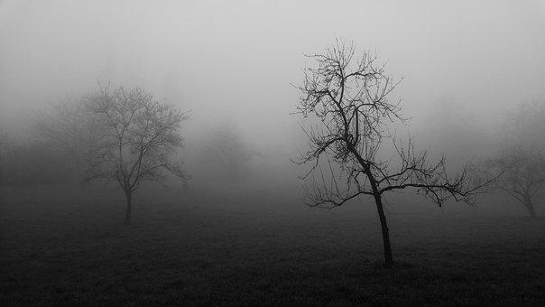 Fog, Tree, Forest, Nature, Landscape, Autumn, Secret