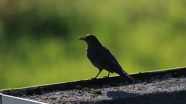 Nature, Bird, Animal World, Bird Watching, Sitting