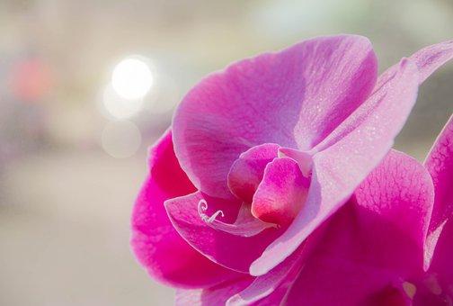 Orchid, Flower, Flora, Nature