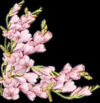 Flowers, Pink, Spring, Arrangement, Card Decoration