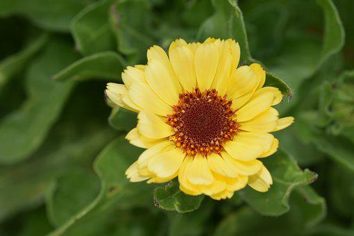 Flower, Yellow Flower, Plant, Pistil, Stamens, Garden