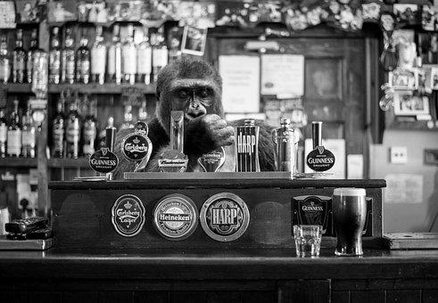 Monkey, Pub, Bar, Beer, Alcohol, Tavern, Nightlife