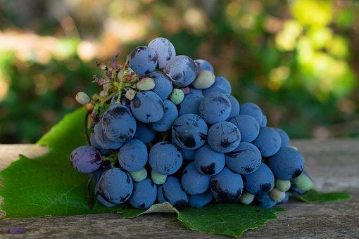 Purple Grapes, Grapes, Napa Valley, Napa Vineyard, Vine