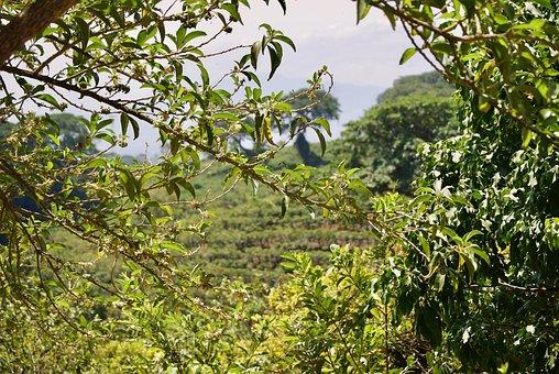 Costa Rica, Trees, Nature, Tropical, Jungle, Rainforest