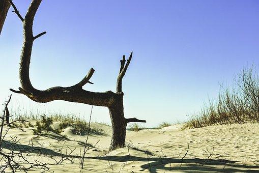 Pine, Beach, Dunes, Sand, Tree, Branch, Bench, Natural