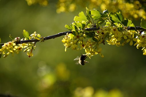 Spring, Branch, Yellow, Flowers, Plant, Season, Leaves