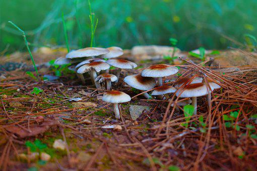 Natural Mushrooms, Nature, Forest, Small Mushrooms