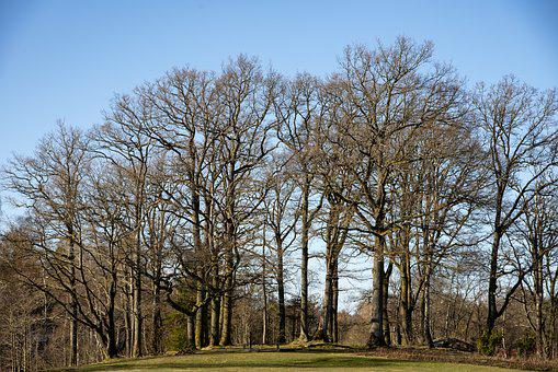 Tree, Spring, Forest, Branches, Grove, Plant, April