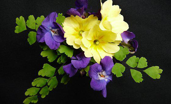 Flowers, Primrose, Violets, Fern, Garden, Nature