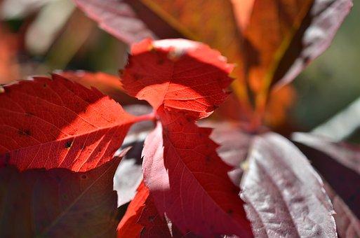 Autumn, Foliage, Forest, Nature, Colorful, Landscape