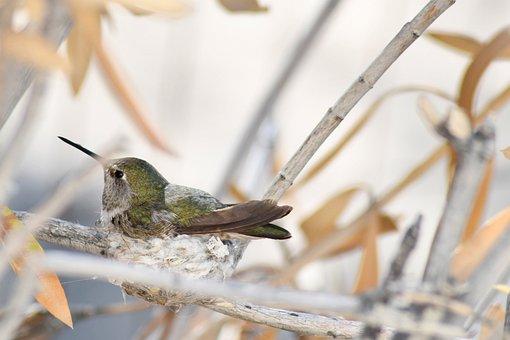 Spring, Nest, Bird, Nature, Feather, Natural, Plumage