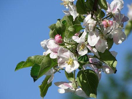 Fruit Tree, Blossom, Bloom, Spring, Nature, Branch