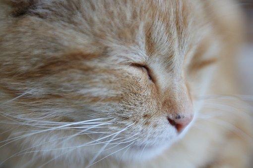 Cat, Sleeping, Pet, Sleep, Animal, Cute, Fur, Fuzzy