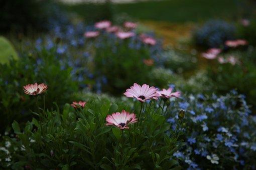 Chrysanthemum, Daisy, Wildflower, Flowers, Plants
