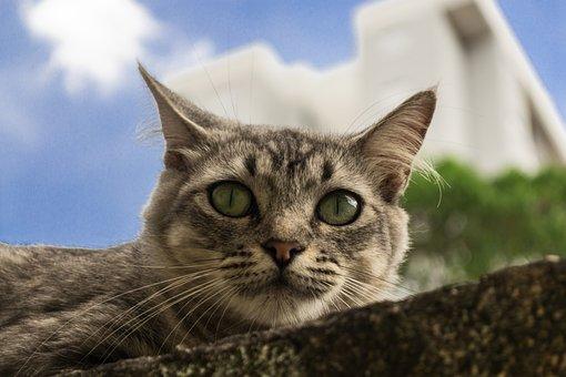 Cat, Pet, Animal, Kitten, Portrait, Feline, Fur, Cut