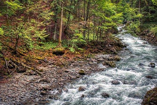 Forest, Oberstdorf, Bavaria, Europe, Scenic