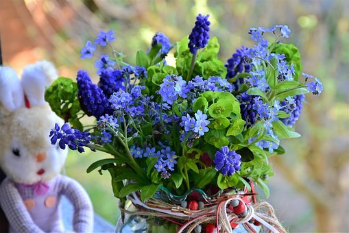 Spring, Forget Me Not, Flowers, Nature, Still Life