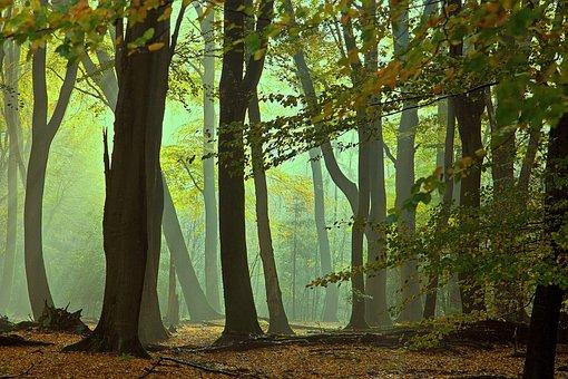 Lochem, Forest, Foggy, Nature, Landscape, Forests
