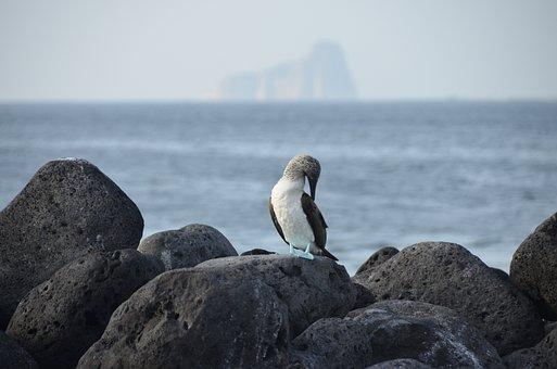Galapagos, Bird, Blauwvoetgent, Nature, Ecuador, Feet