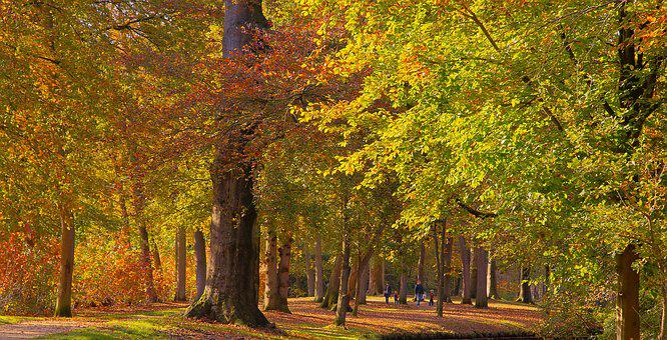 Koniging Emmapark, Baarn, Groenenveld, Trees, Autumn