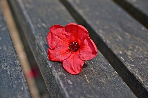 Flower, Red, Mandevilla, Jasmine Of Brazil, Bench