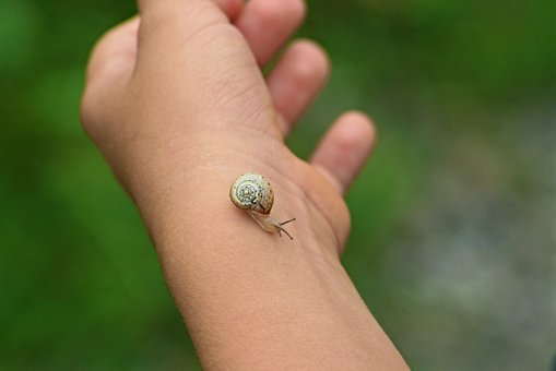 Snail, Kid, Nature, Plays, Excursion, Nature Friendly