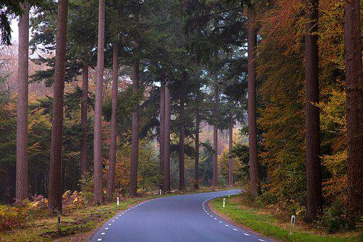 Lochem, Forest, Trees, Nature, Landscape, Forest Path