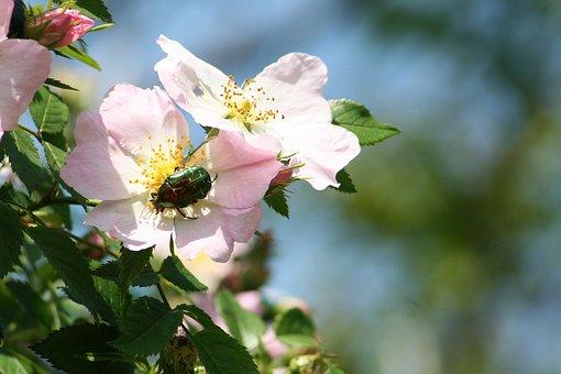Flower, Garden, Nature, Blooms At, Spring, Flowers