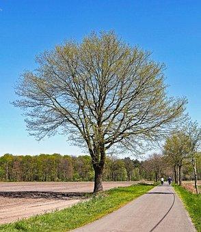 Spring, Oak, Foliation, Field, Forest