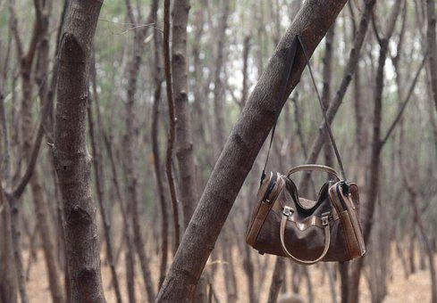 Jungle, Nature, Forest, Camp, Travel, Green, Outdoor
