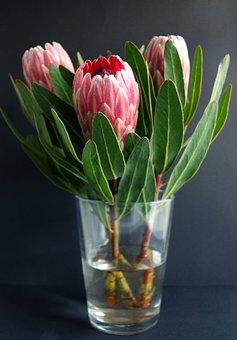 Protea, Vase, Flowers, Plant, Natural, Bloom, Botany